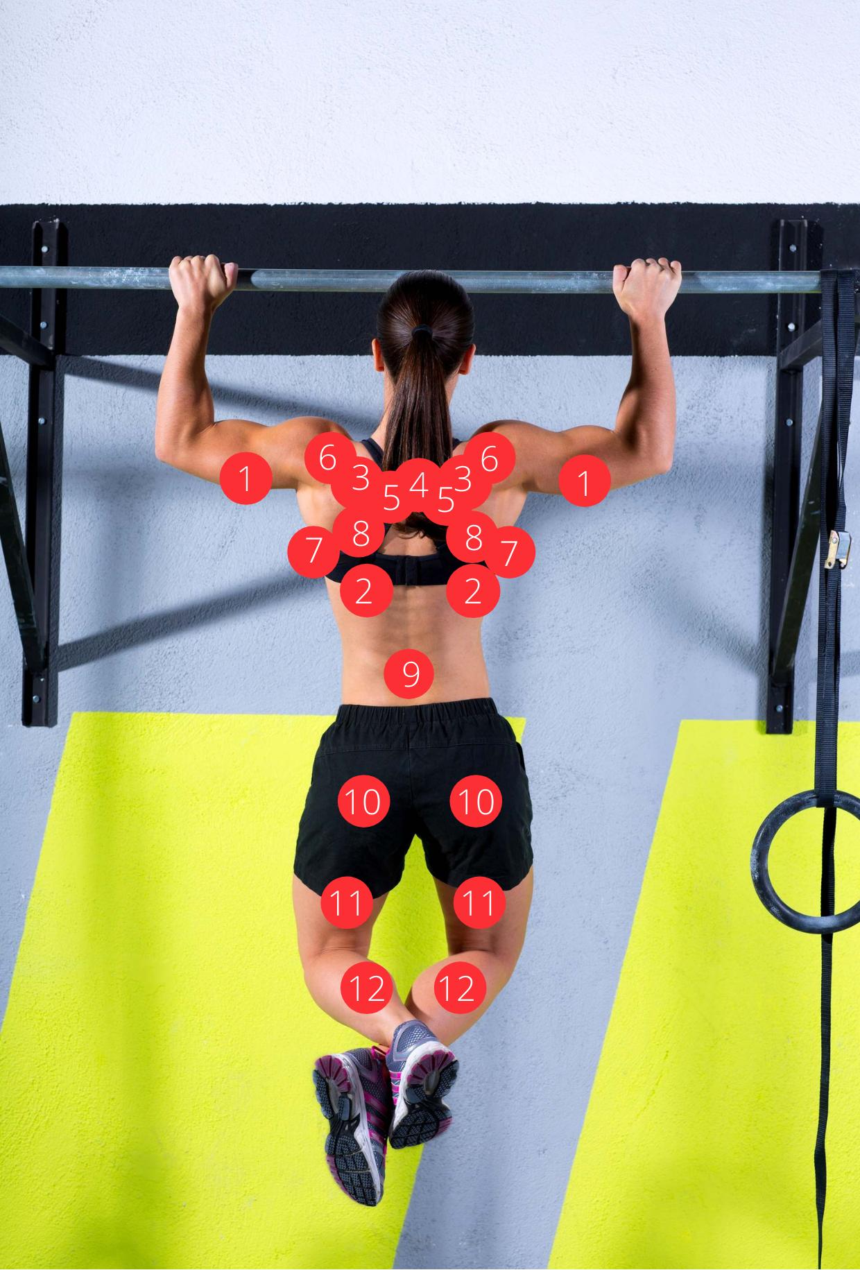 Muskeln im Überblick