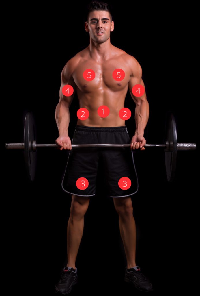 Die wichtigsten Muskeln vorne